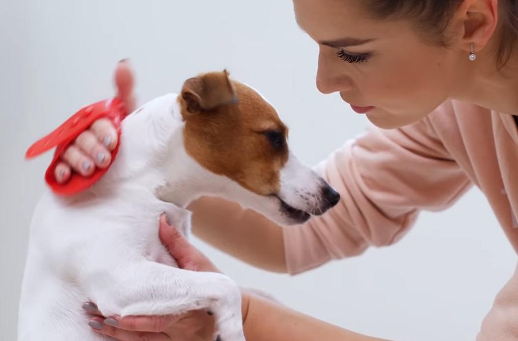 вычесывание собаки