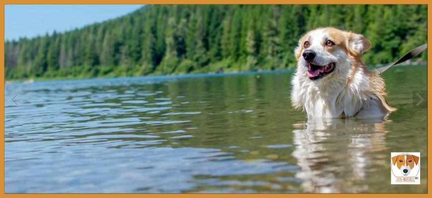 Собаке в жару купанье полезно