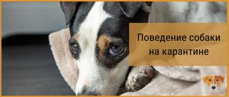 Поведение собаки на карантине